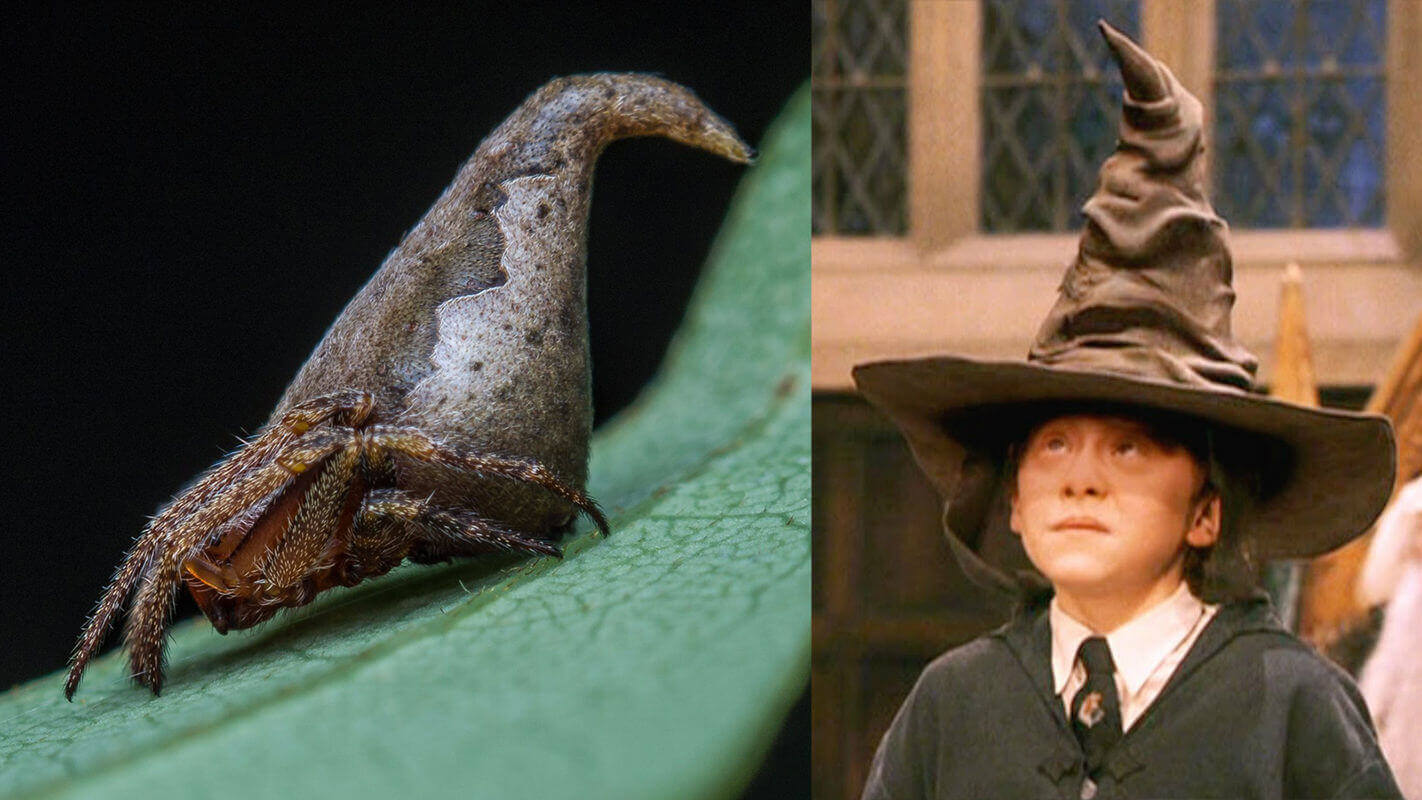 This is where Harry Potter's sorting hat was spotted in India